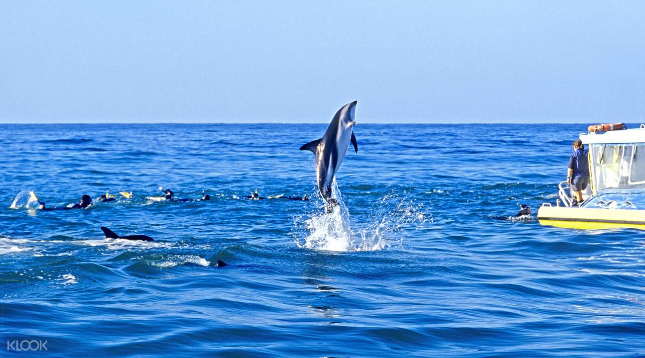 马尔堡观赏海豚与海豚共泳