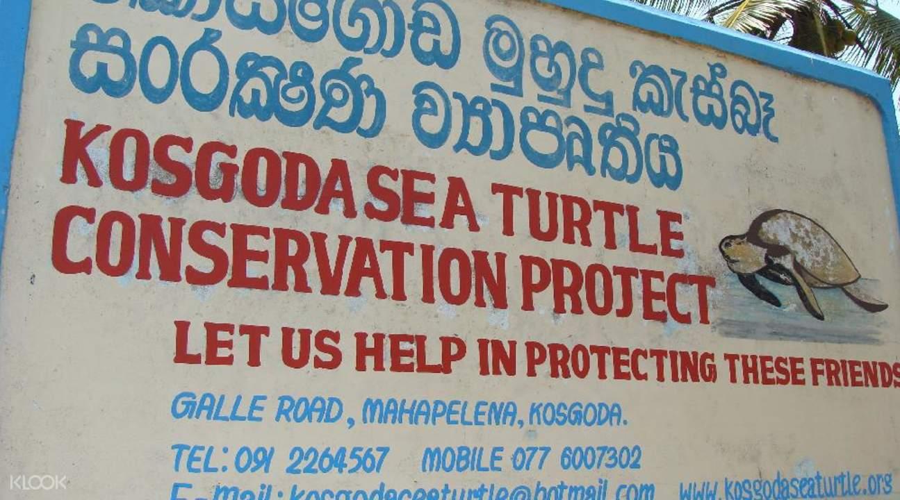 kosgoda sea turtle conservation