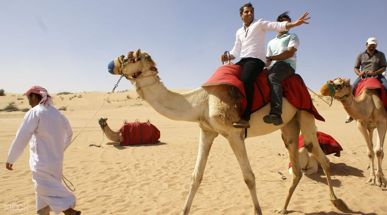 迪拜清晨沙漠骆驼骑行