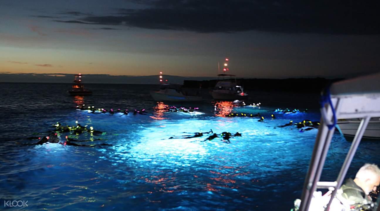 夏威夷大岛夜潜