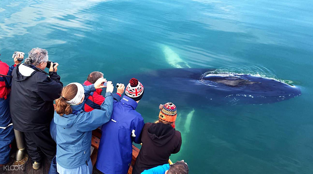 Hauganes 观鲸与海钓体验