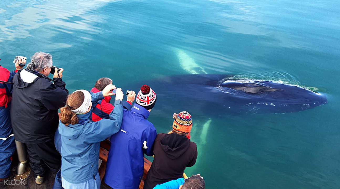 iceland whale tours