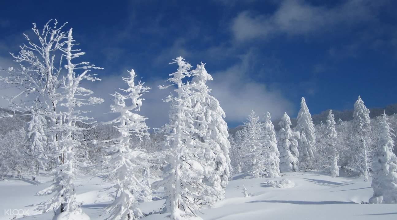 Noboribetsu snow monsters
