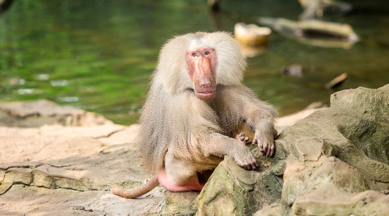 長隆野生動物園門票