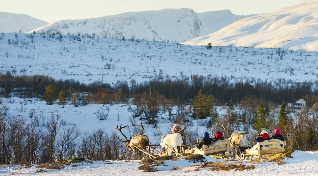 reindeer sledding norway