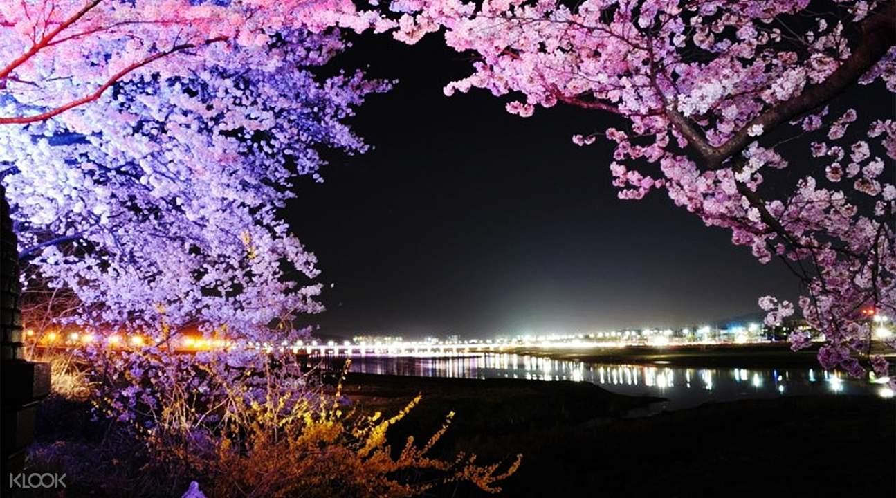 鎮海軍港節& 大邱& 慶州賞櫻兩日遊