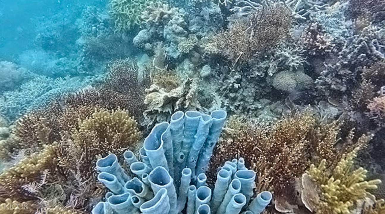 coral reefs in Lusong Coral Garden coron