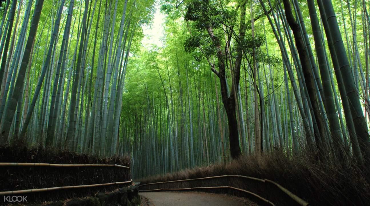 kyoto and nara day tour