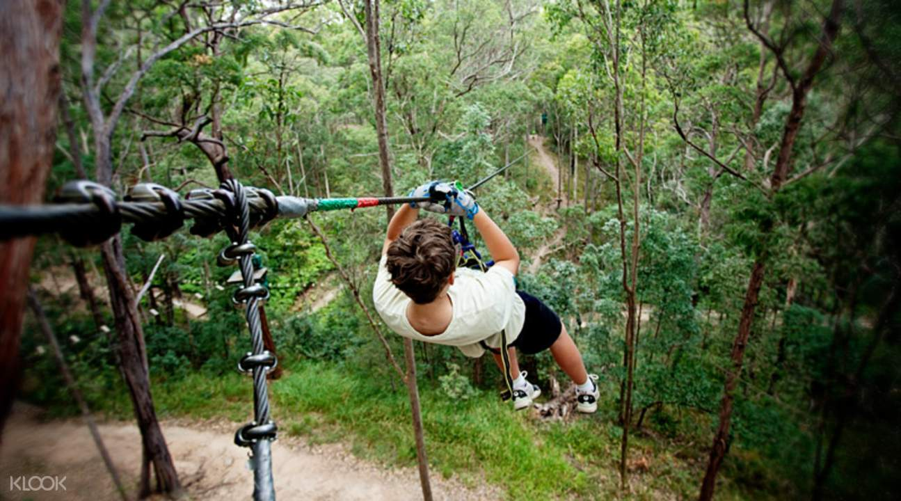 treetop challenge from gold coast
