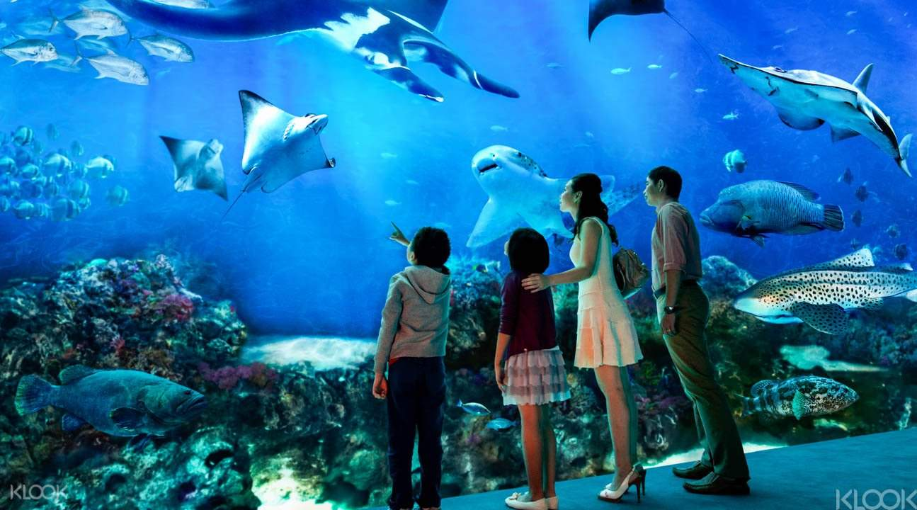 tourists looking at sea creatures in SEA Aquarium Singapore