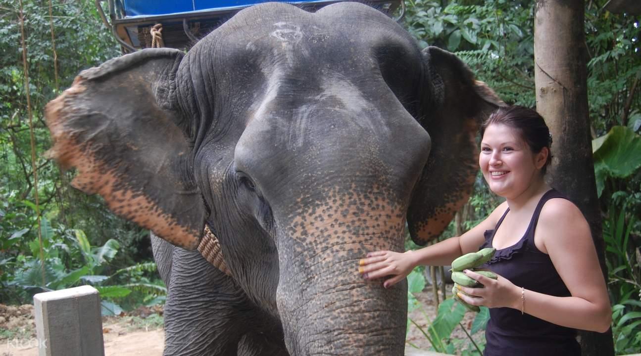 elephant at khao lak national park