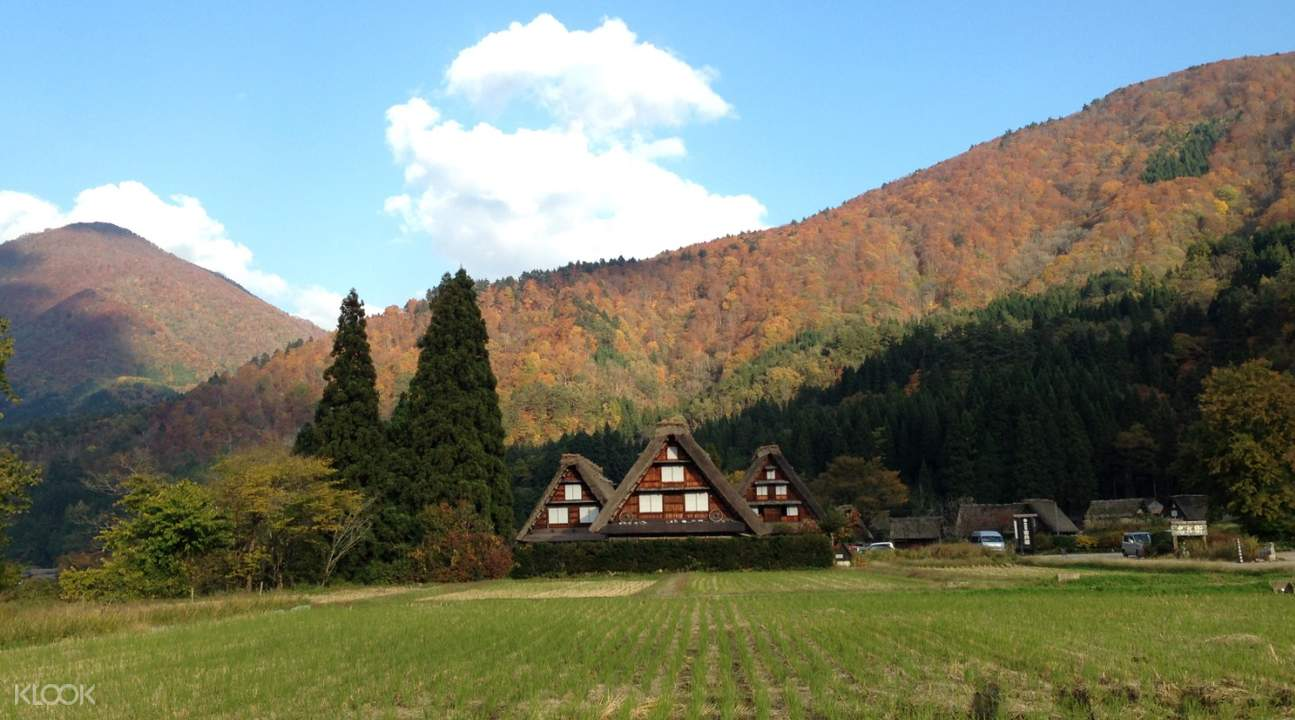 three gassho-zukuri farmhouses in Ogimachi Village during autumn