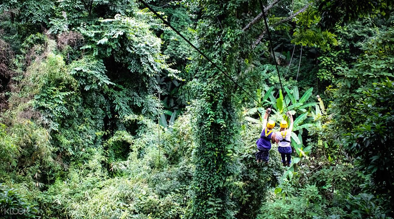 清迈大象保护营 & 丛林飞跃一日游(Gibbons love Elephants)