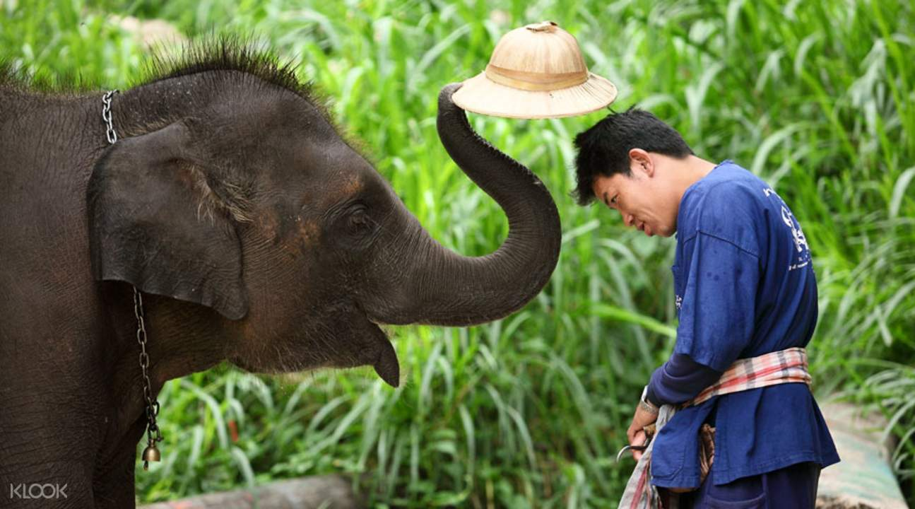 elephant playing with guest