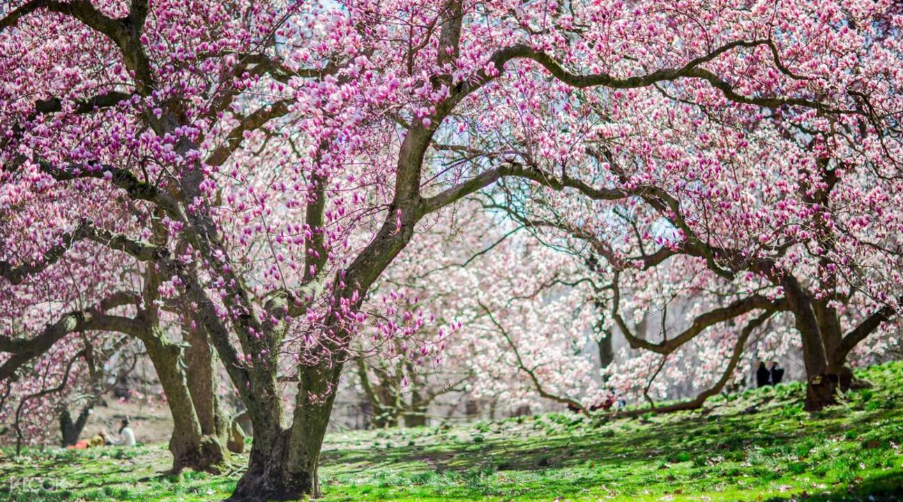 纽约植物园春季