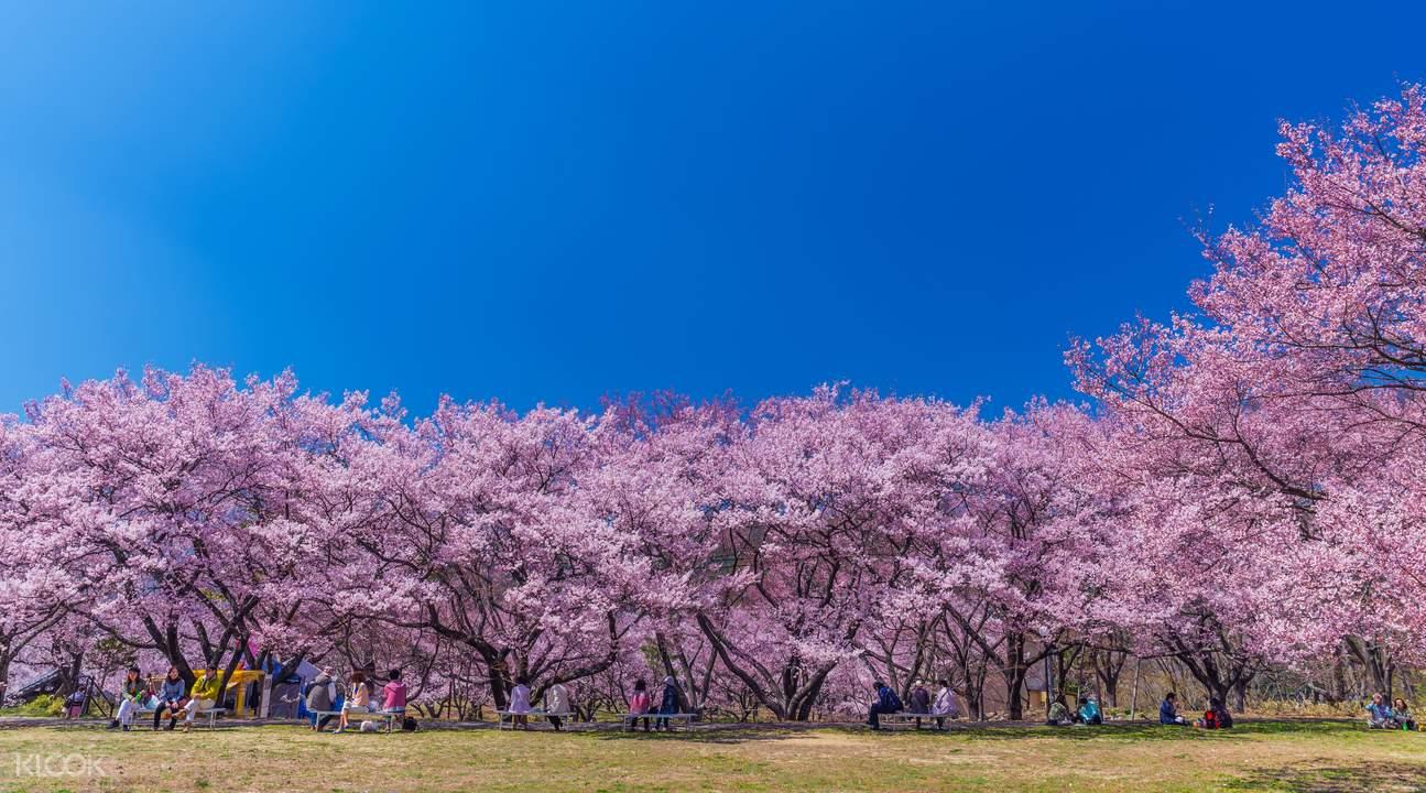 takato sakura