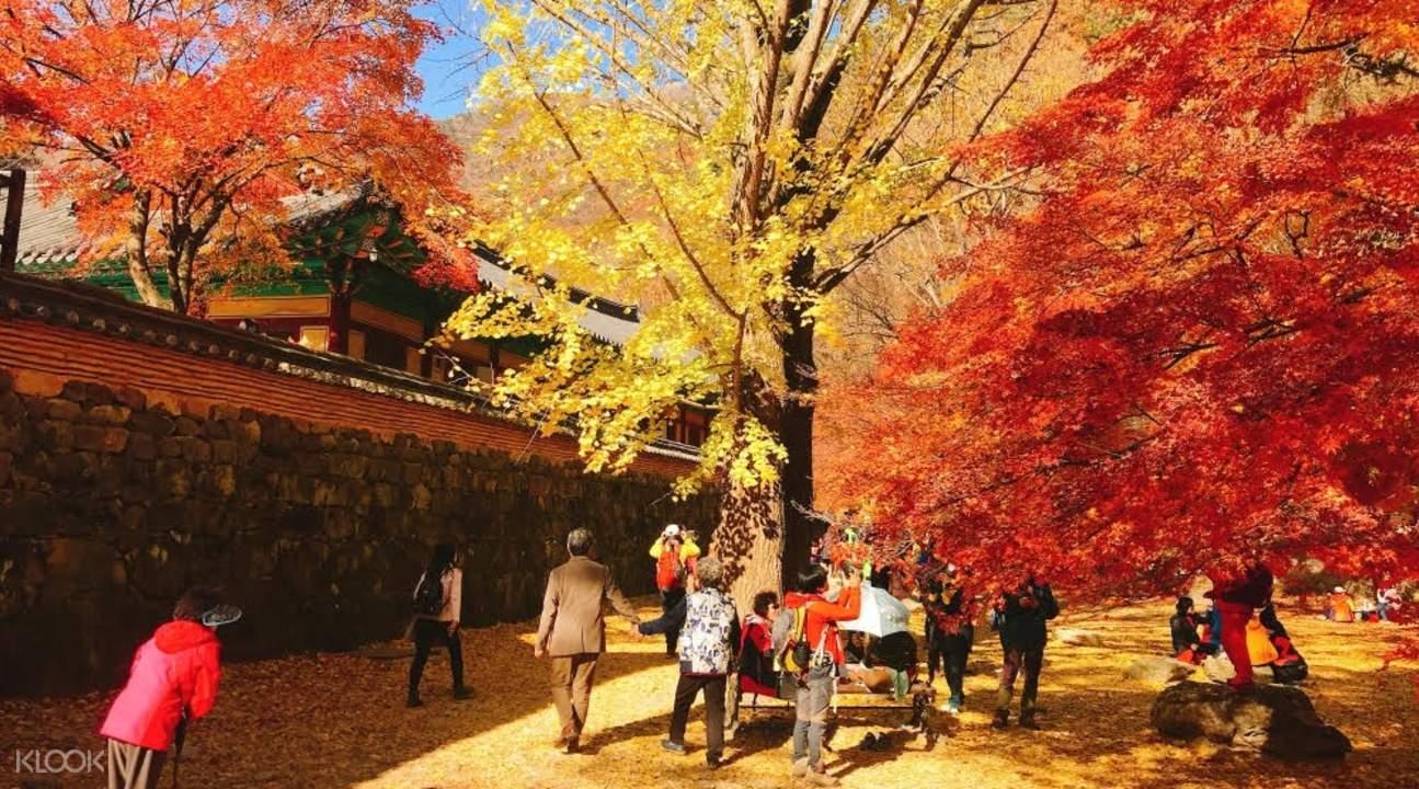 內藏山公園賞楓之旅