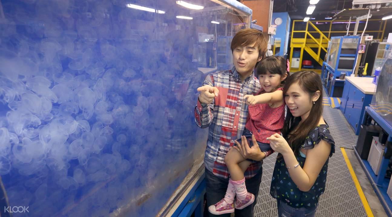 香港海洋公园水母幕后之旅