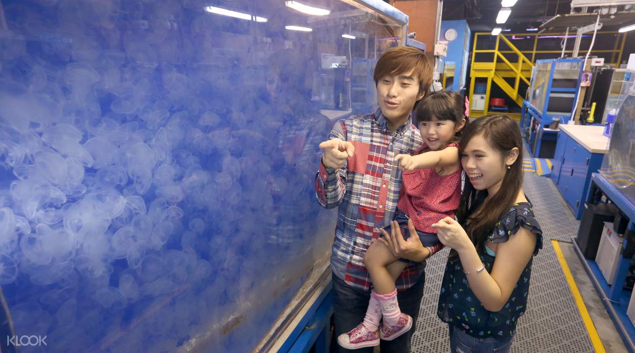 香港海洋公園水母幕後之旅