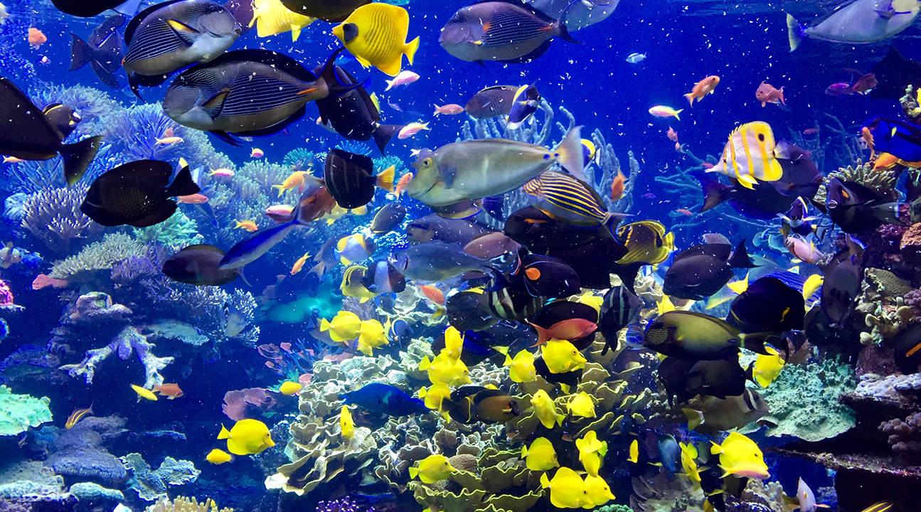 新英格蘭水族館門票