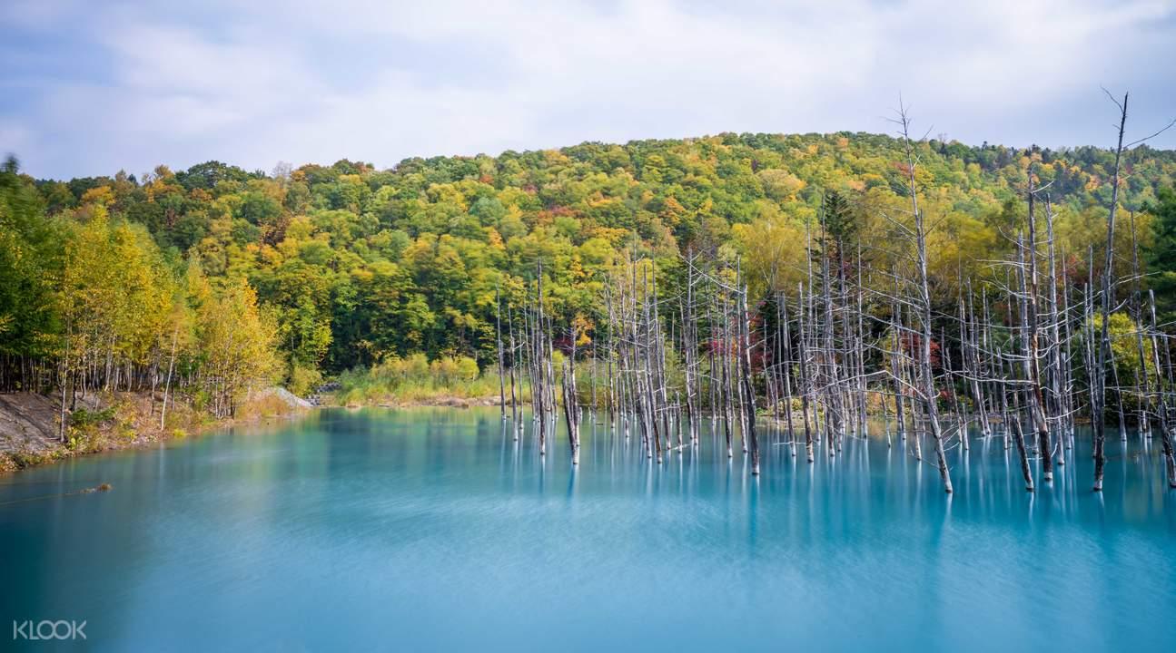 美瑛青池,北海道景点,日本旅游,北海道一日游