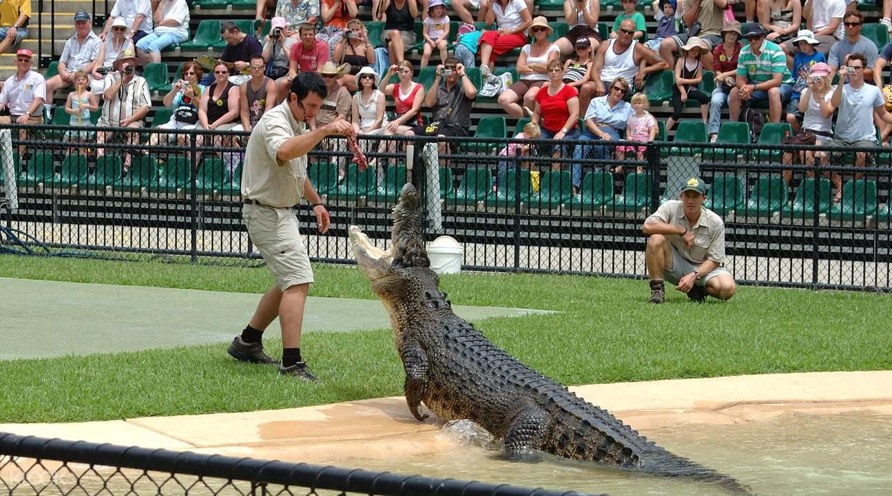 crocodile show australia zoo