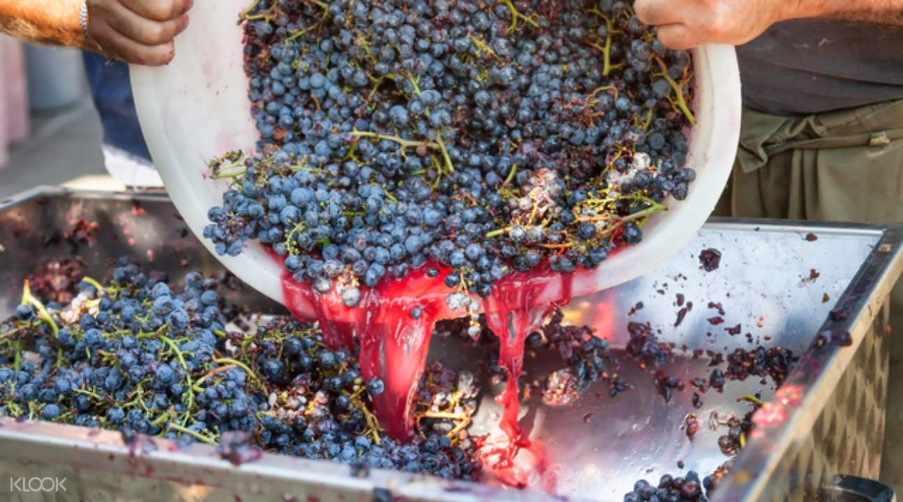 wine getting produced using grapes