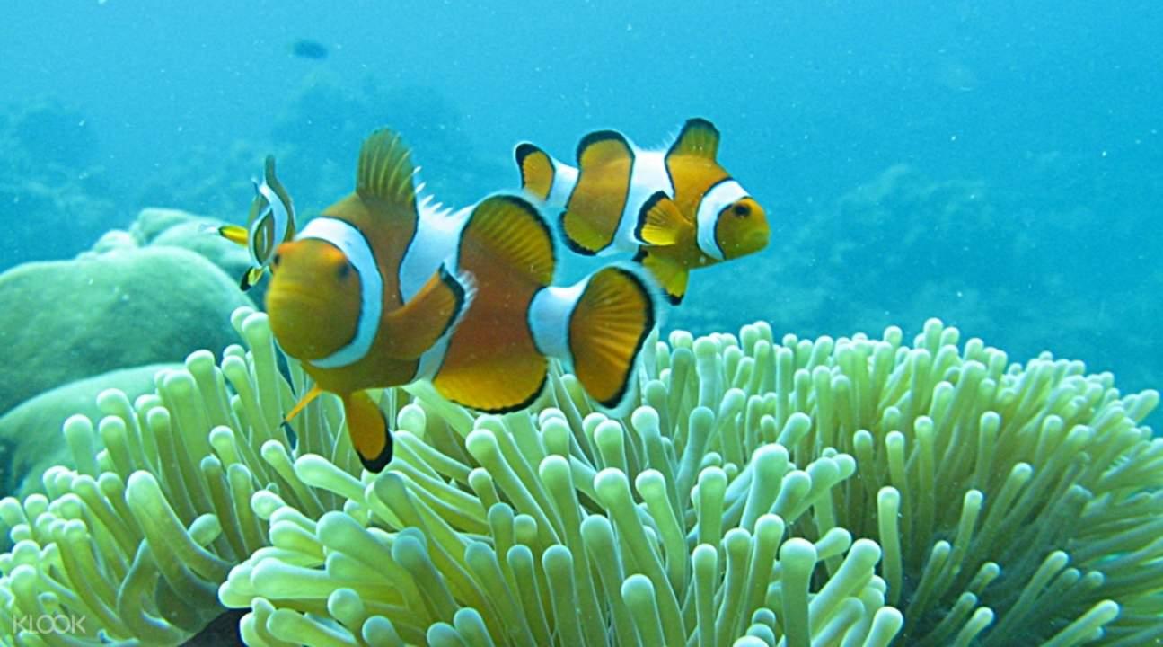 象岛国家海洋公园