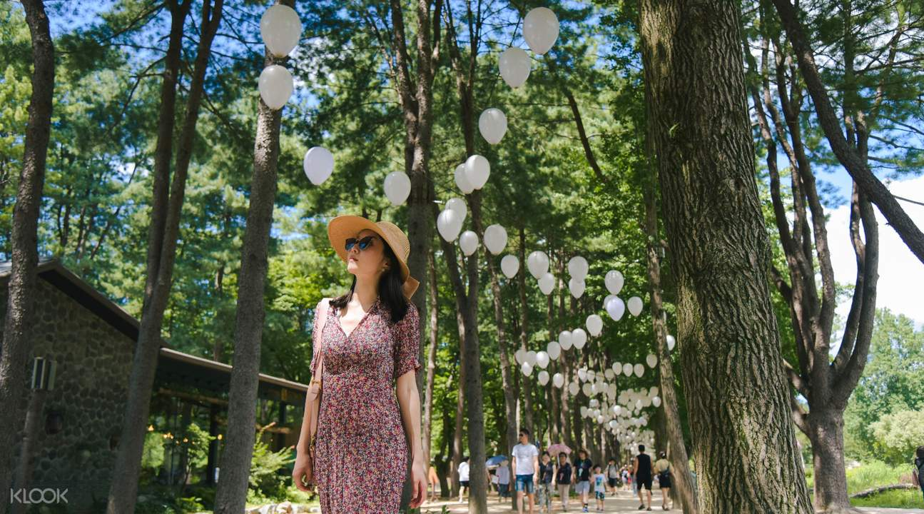 Nami Island's Tree-Lined Streets in Gangwon-do