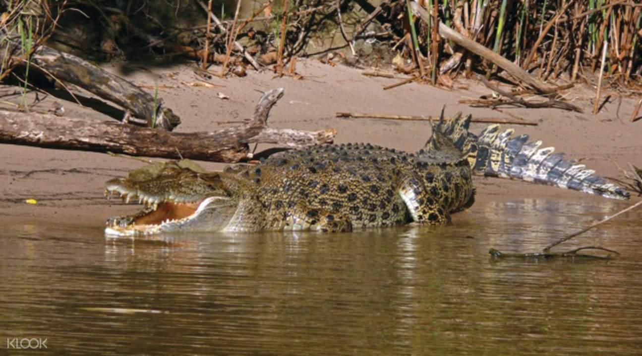 瑪麗河濕地鹹水鳄魚