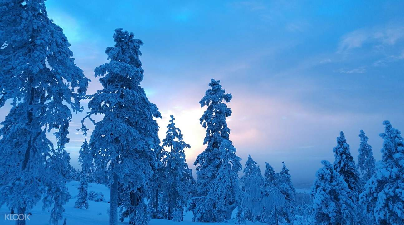 芬蘭北極叢林