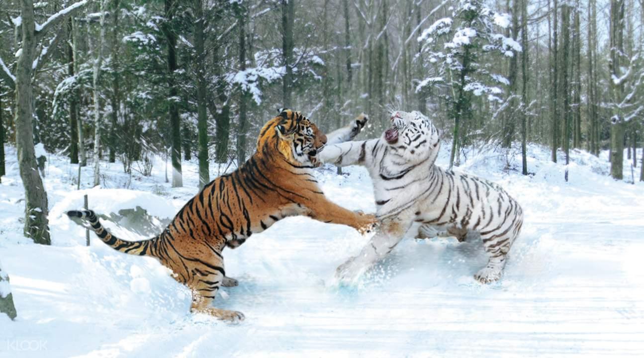 爱宝乐园动物园