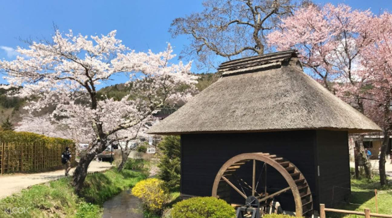 富士河口湖樱花 & 新仓富士浅间神社
