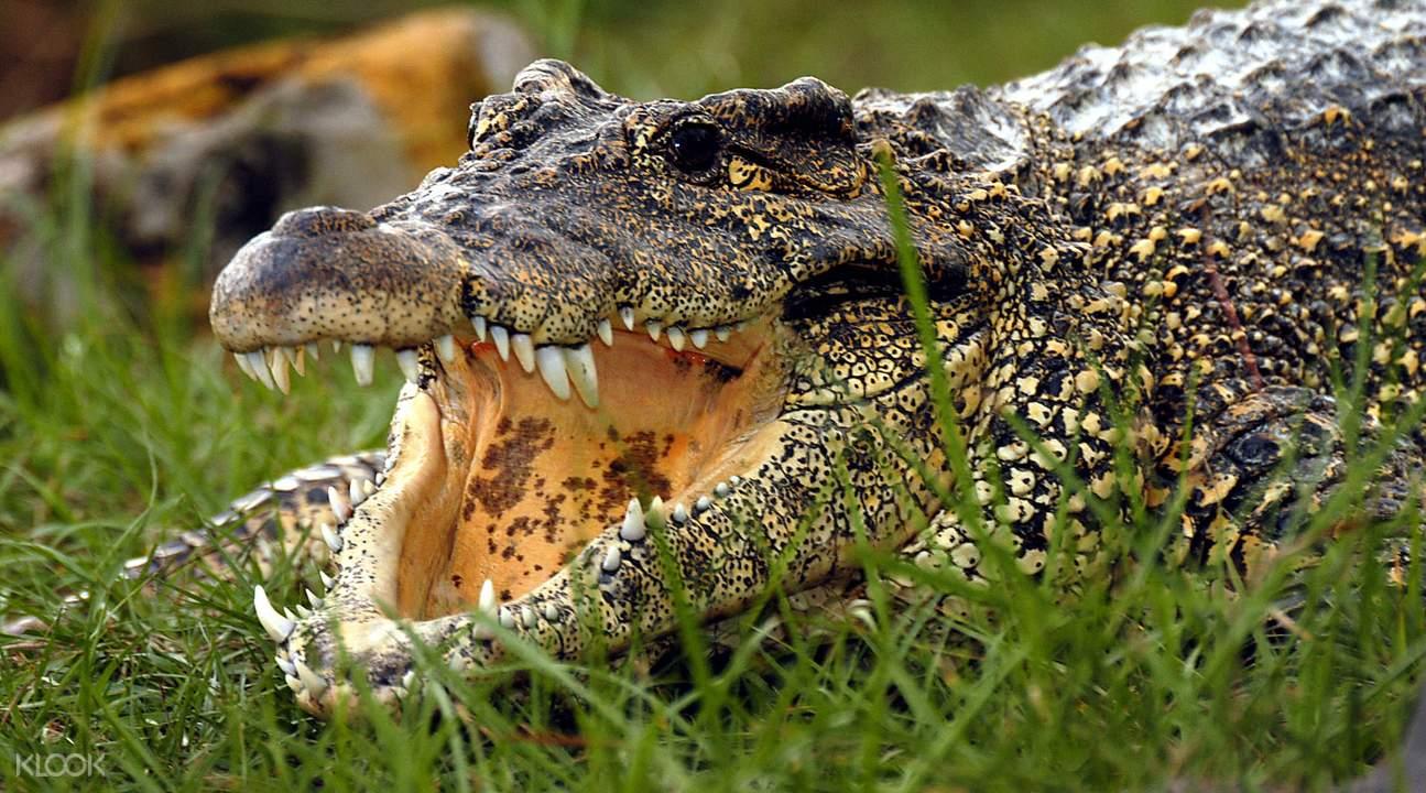 世界鱷魚之都