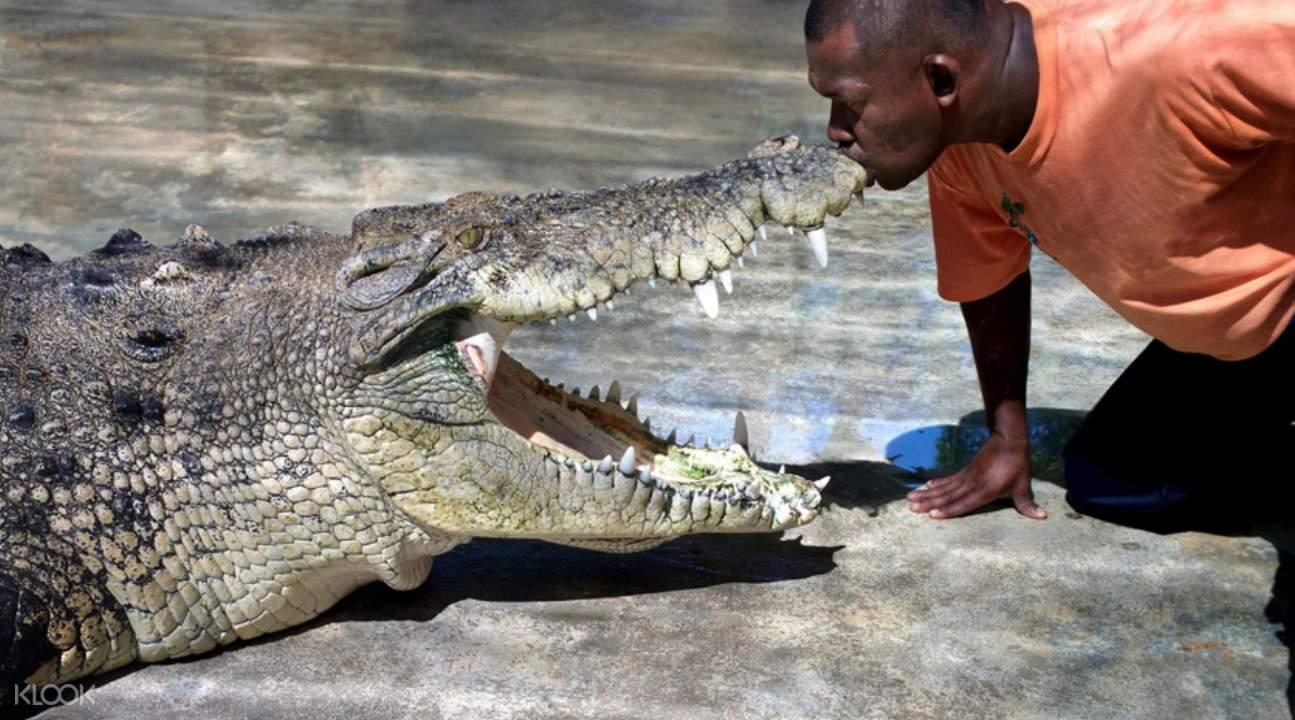 crocodiles in malaysia