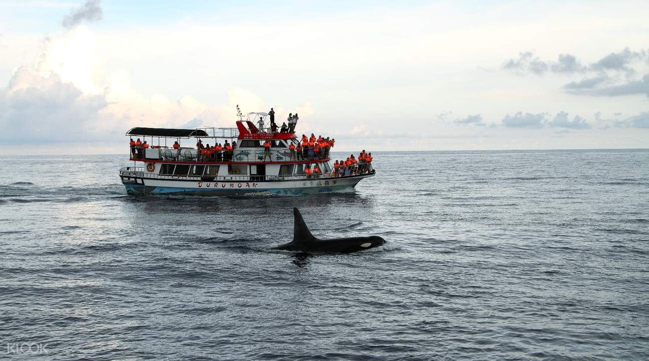 花莲港赏鲸