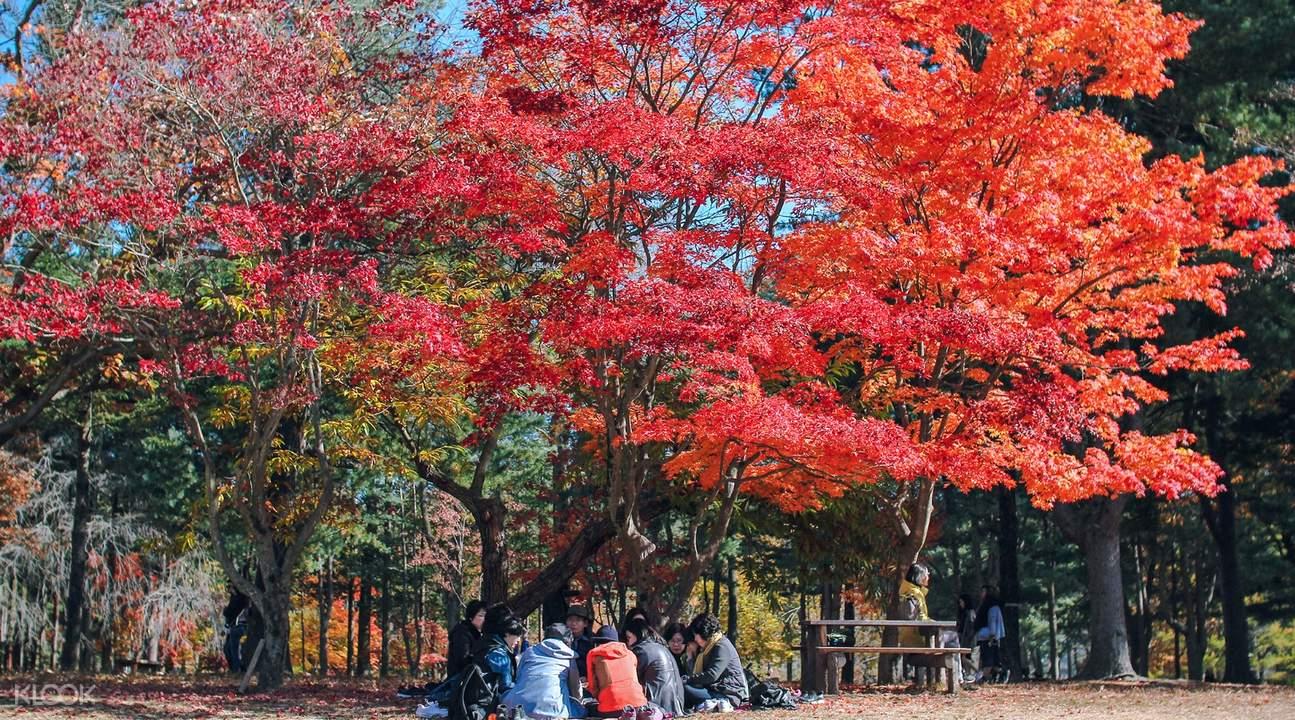 nami island autumn trees