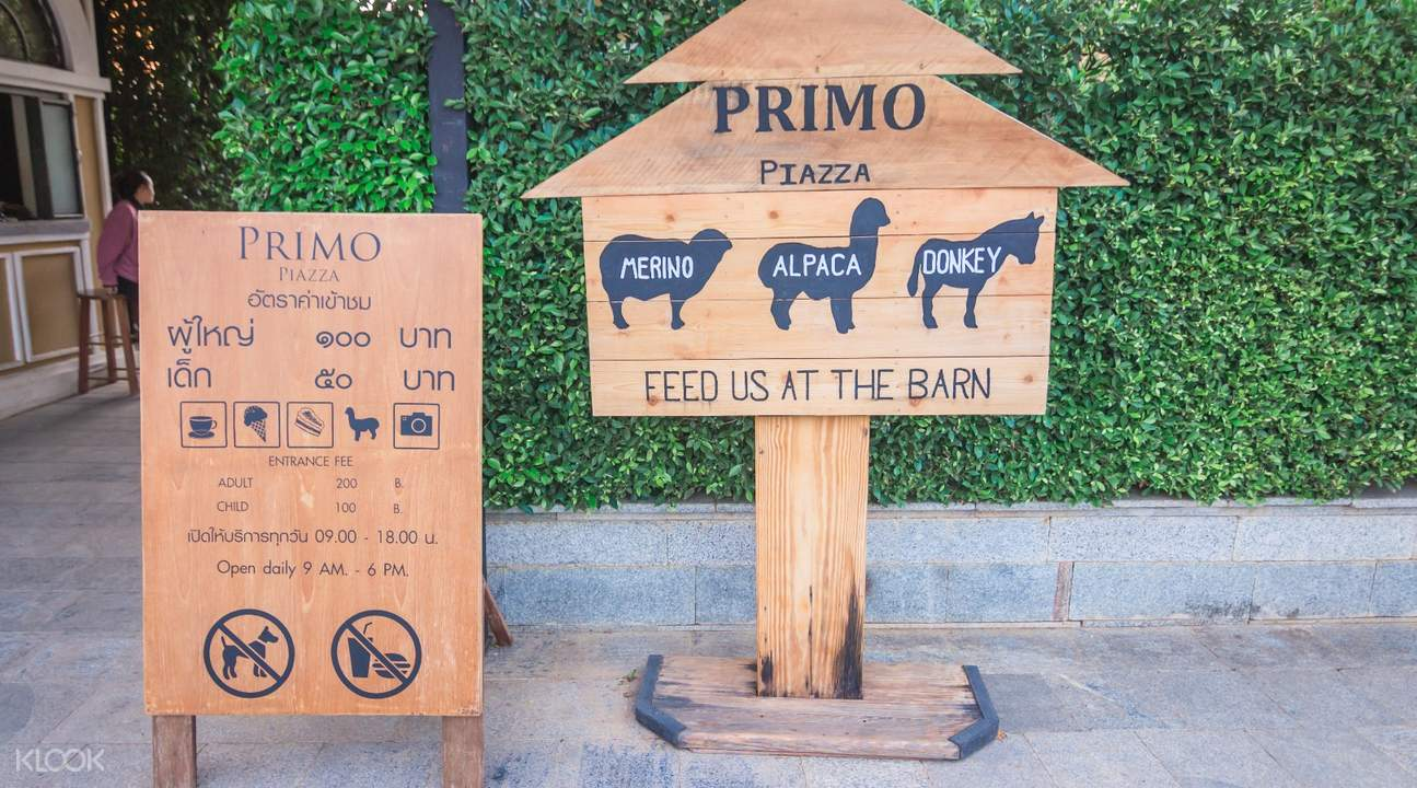 primo piazza alpaca feeding khao yai
