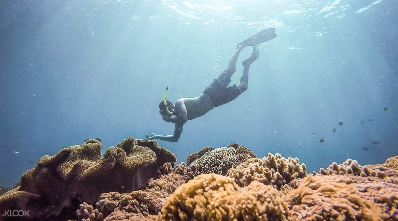 someone snorkeling and checking corals somewhere in Bali
