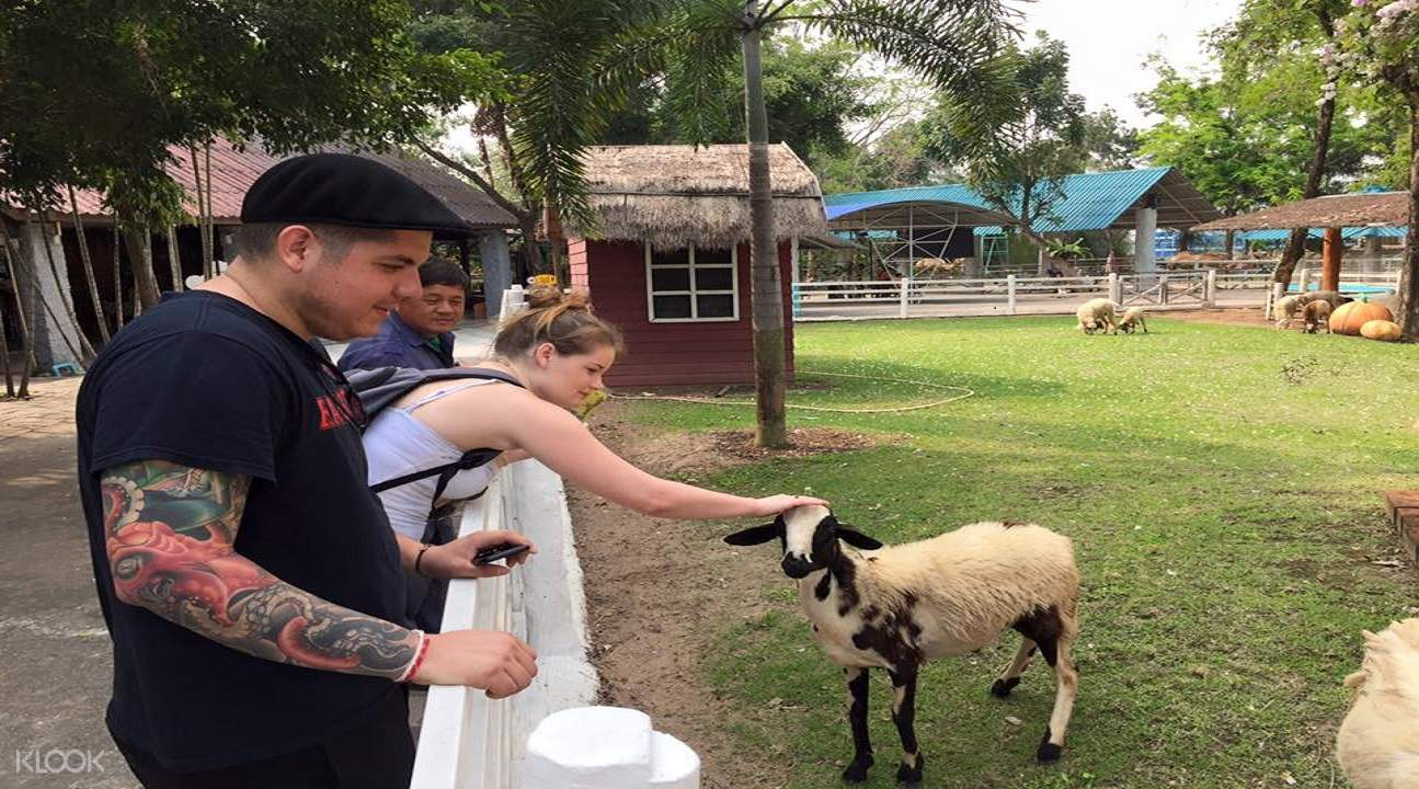 guests petting goats