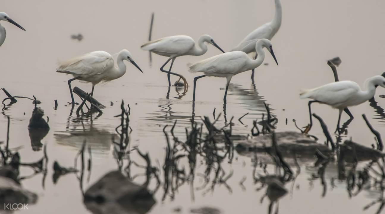 廣州海珠濕地公園