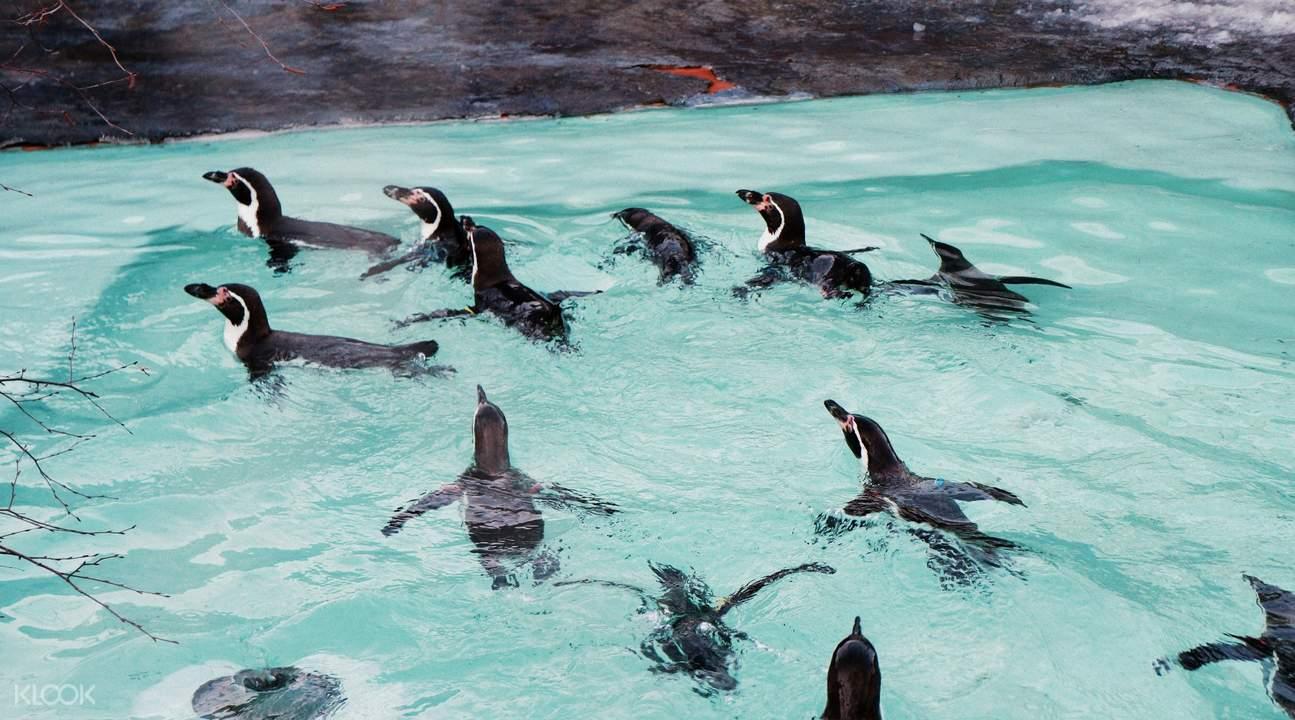 北海道旭山動物園