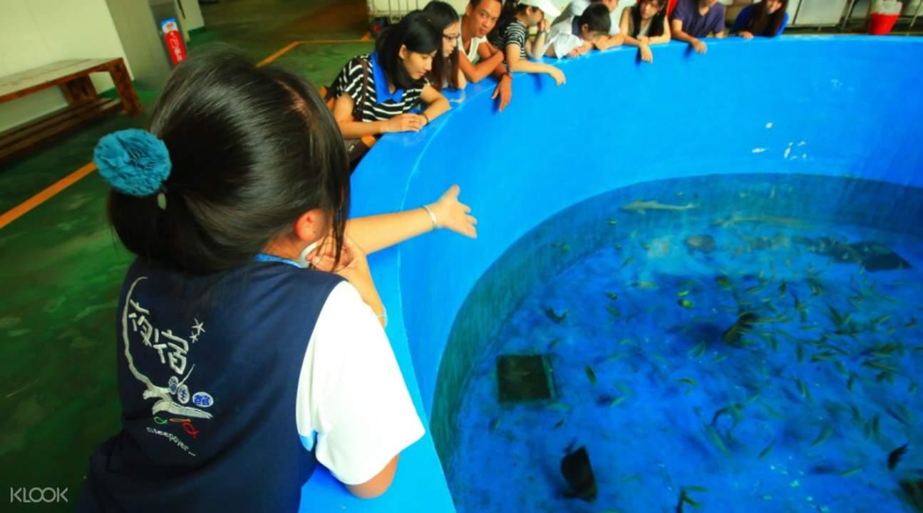 penguins in national museum of marine biology and aquarium kenting