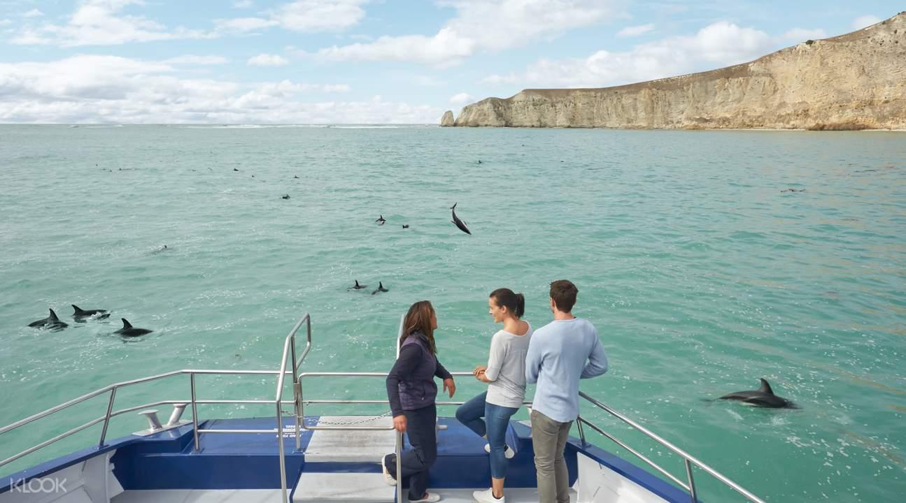 船上观赏新西兰贺氏矮海豚