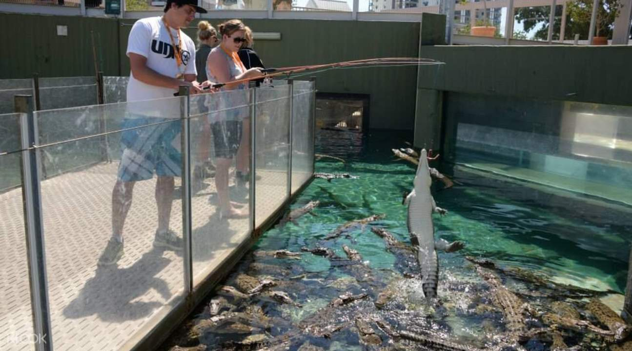 鹹水鱷魚垂釣