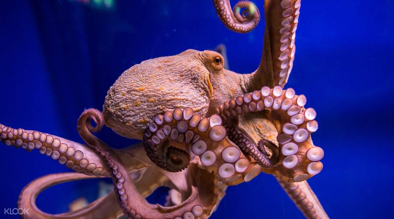 巴賽隆納水族館