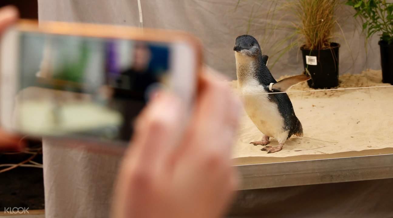 墨爾本動物園門票,墨爾本動物園企鵝,澳洲動物園