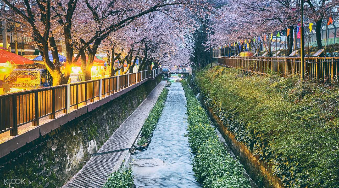 Korea Cherry Blossoms Tour