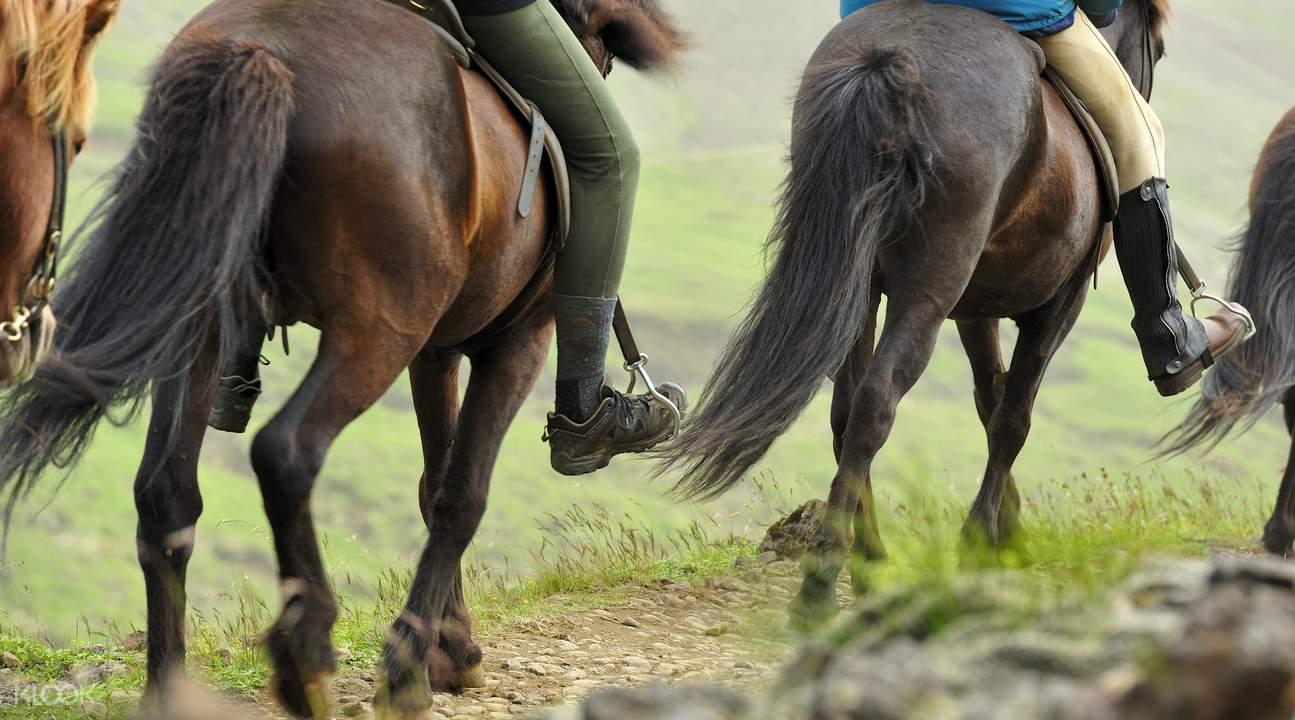 冰岛首都骑马体验