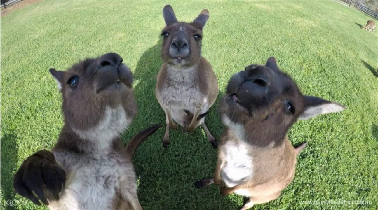 Eyre Peninsula South Australia